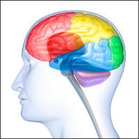 Lobes of the Brain  Introduction to Psychology